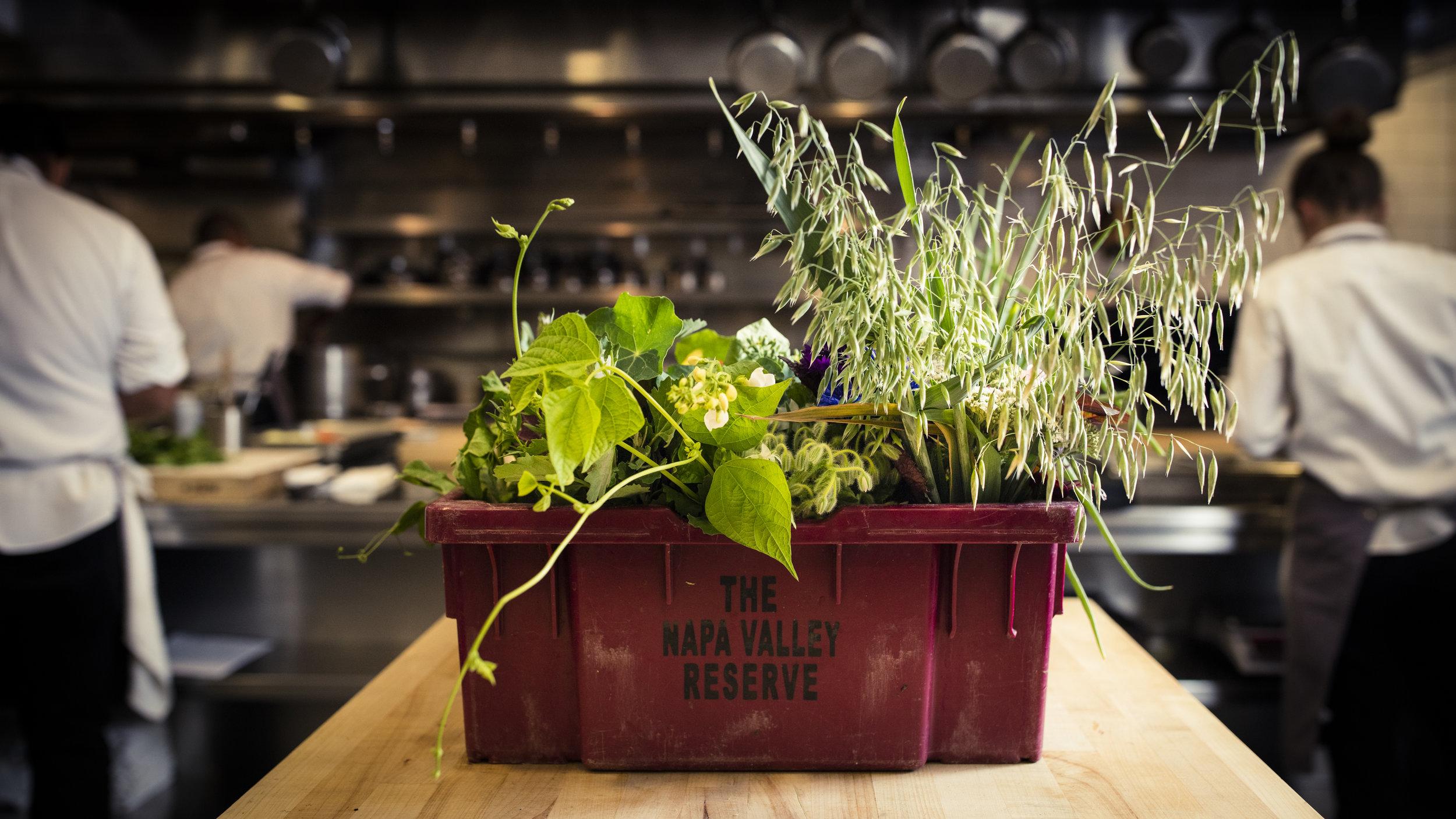 TRAM Garden Box (1).jpg