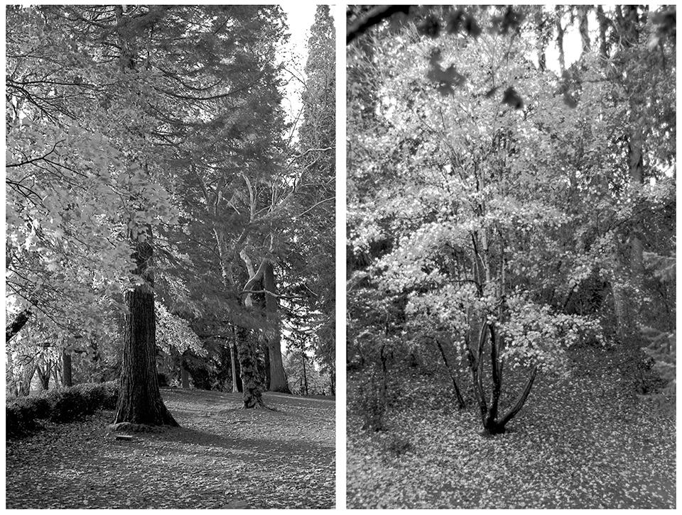 Laurelhurst Park, Portland, Oregon