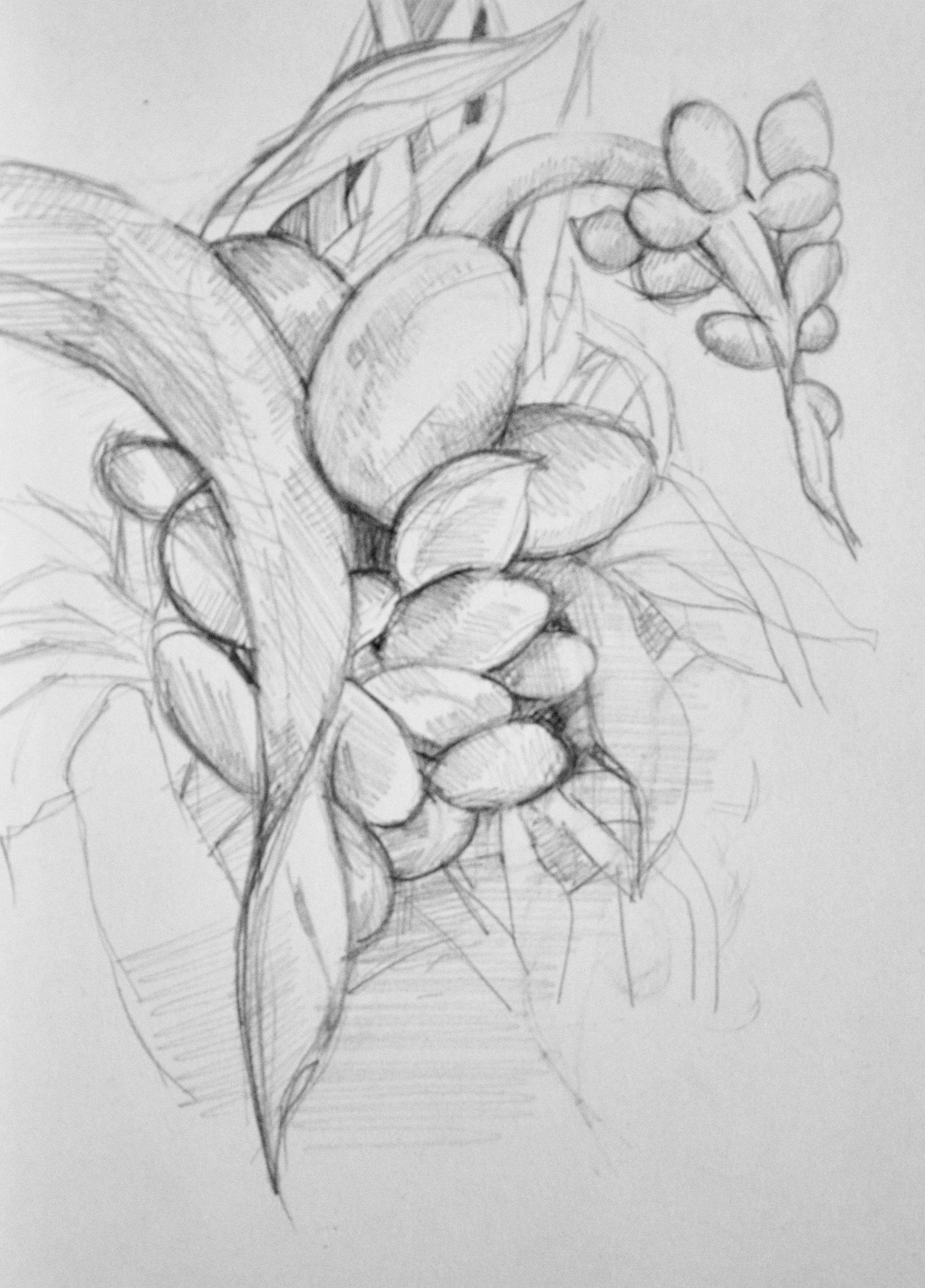 Cluster flowers,   2018  Graphite on paper