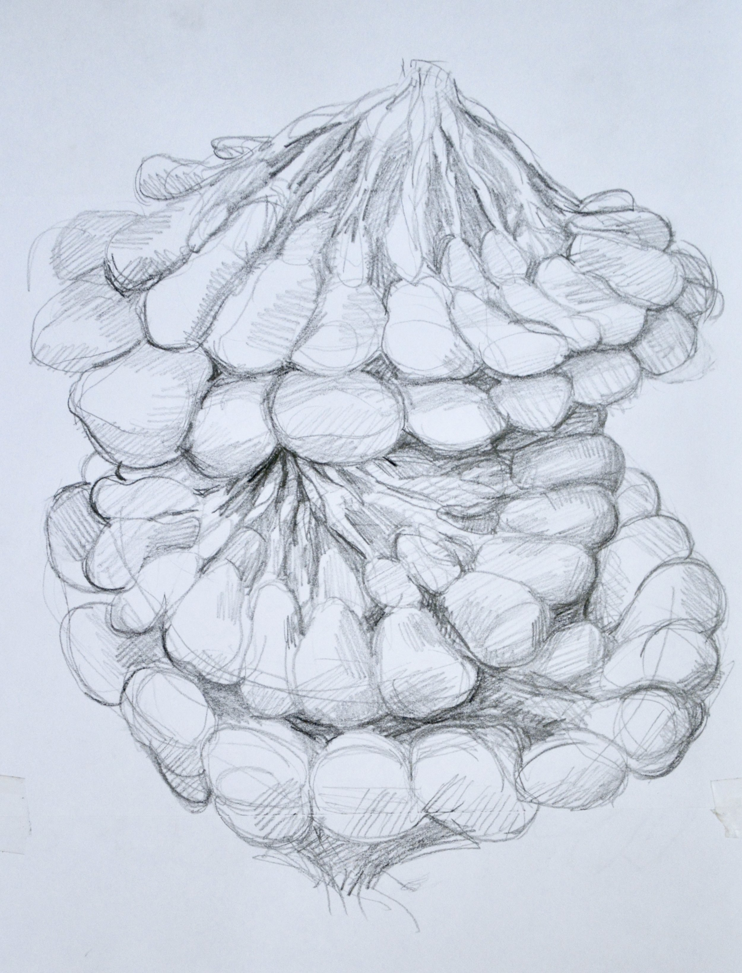 Broodles Study V,   2017  Graphite on Paper