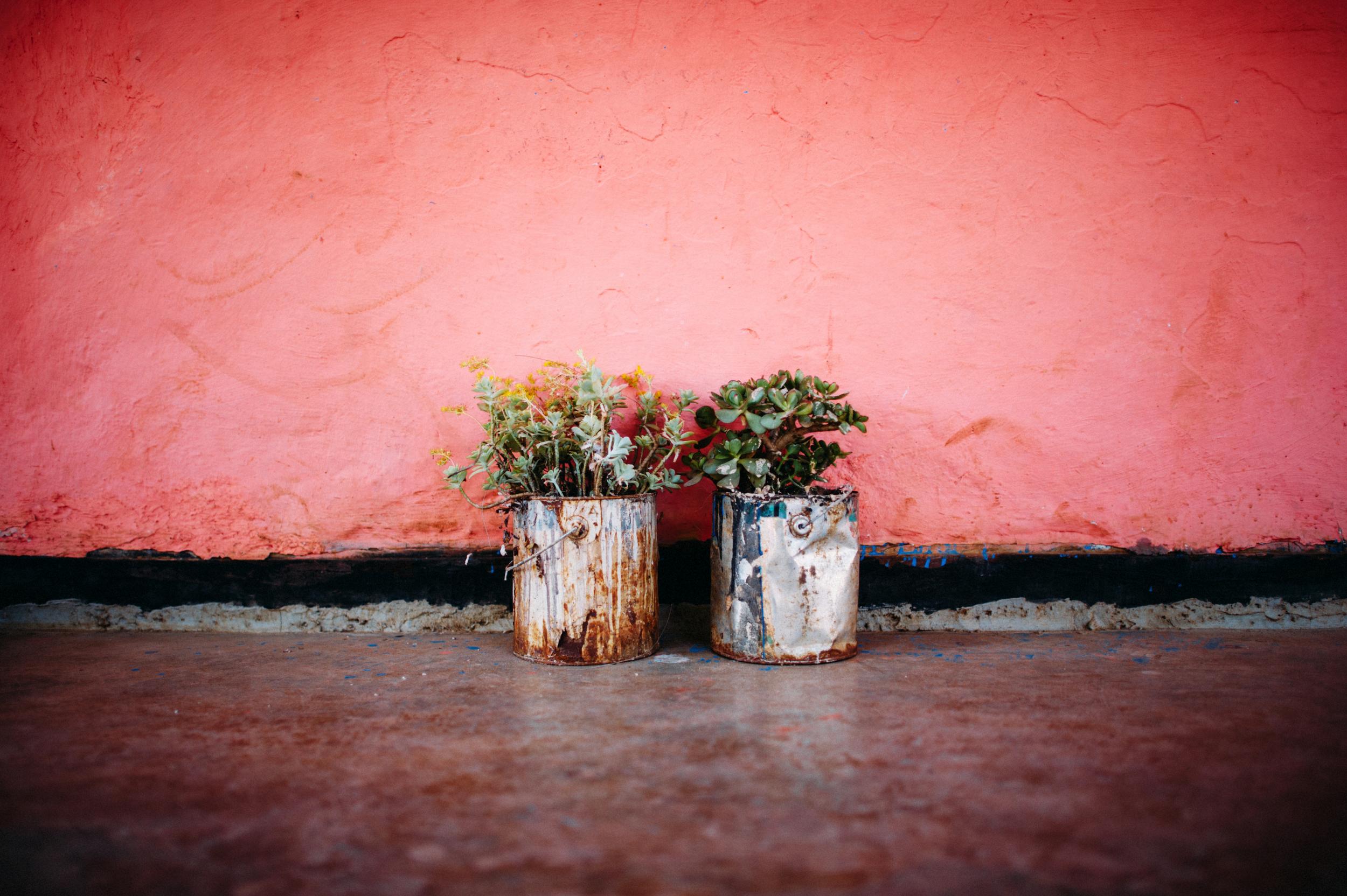 ethiopiaplants-1.jpg