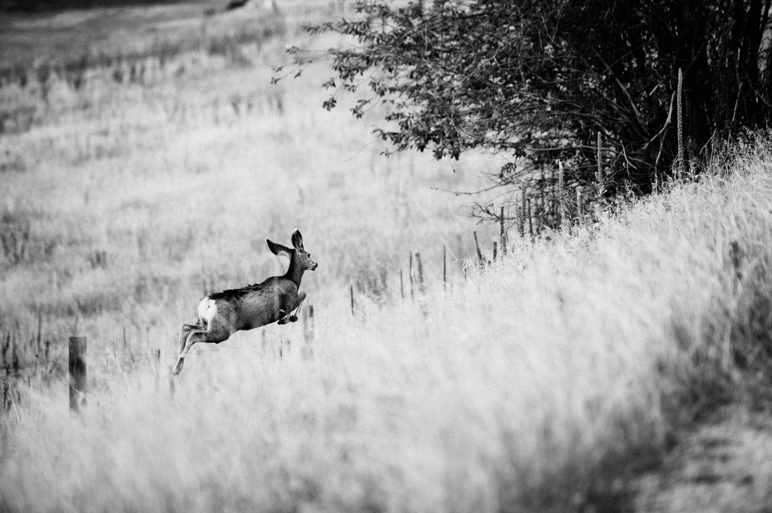 deer run-1.jpg