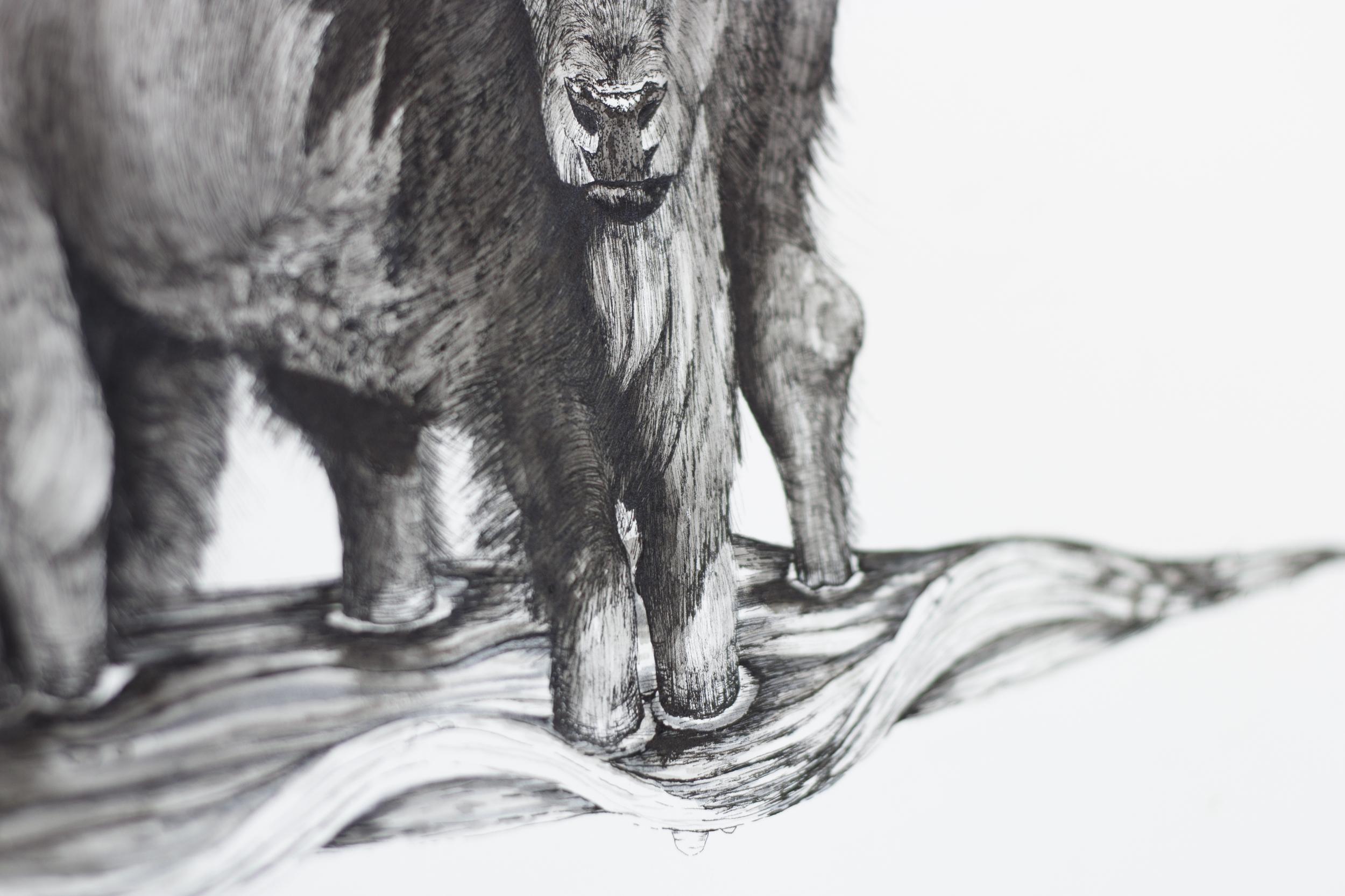Bison Bison (Detail Shot)