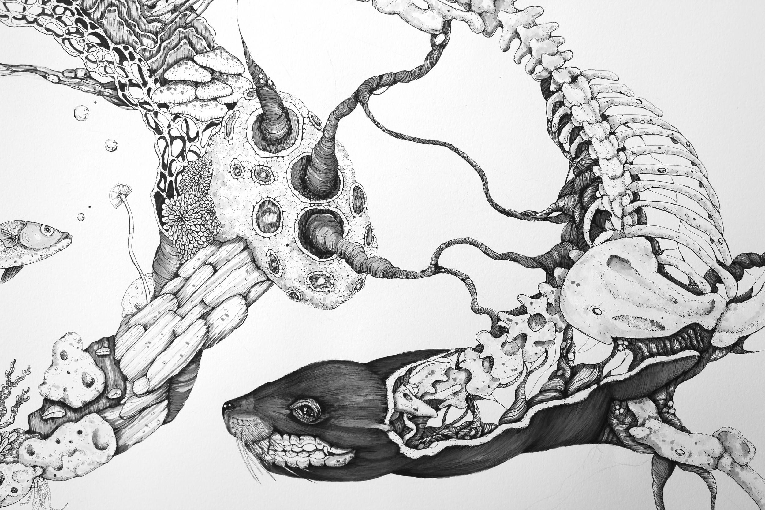 Eumetopias Jubatus (Detail Shot)