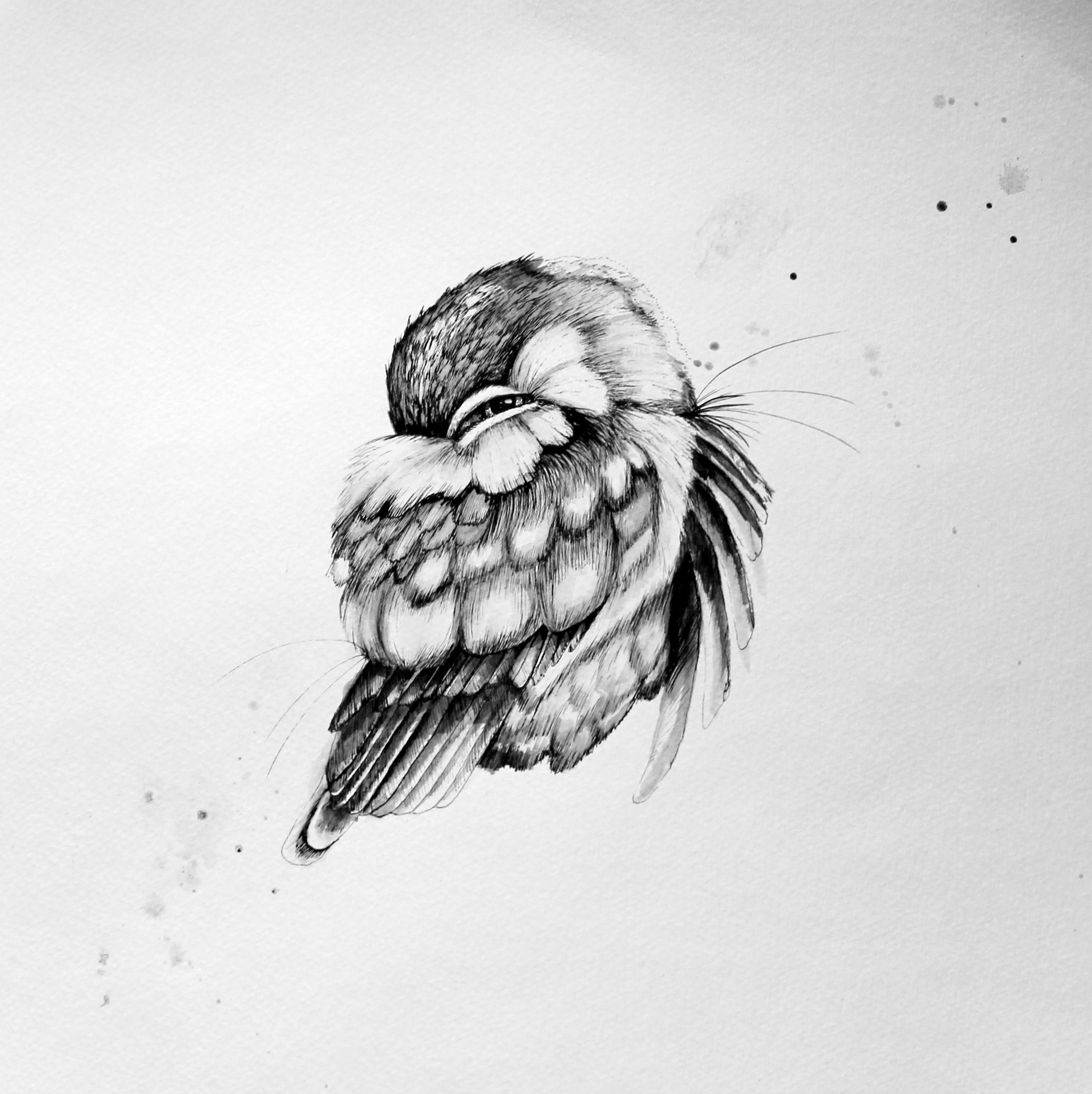 Sleepy Bird 1