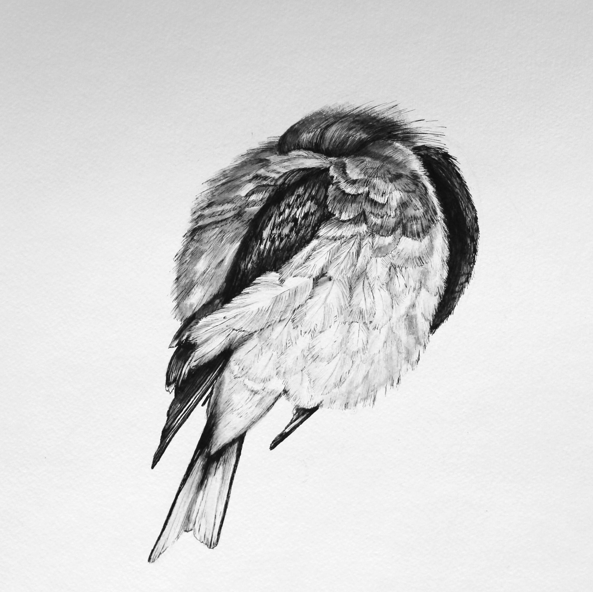 Sleepy Bird 2