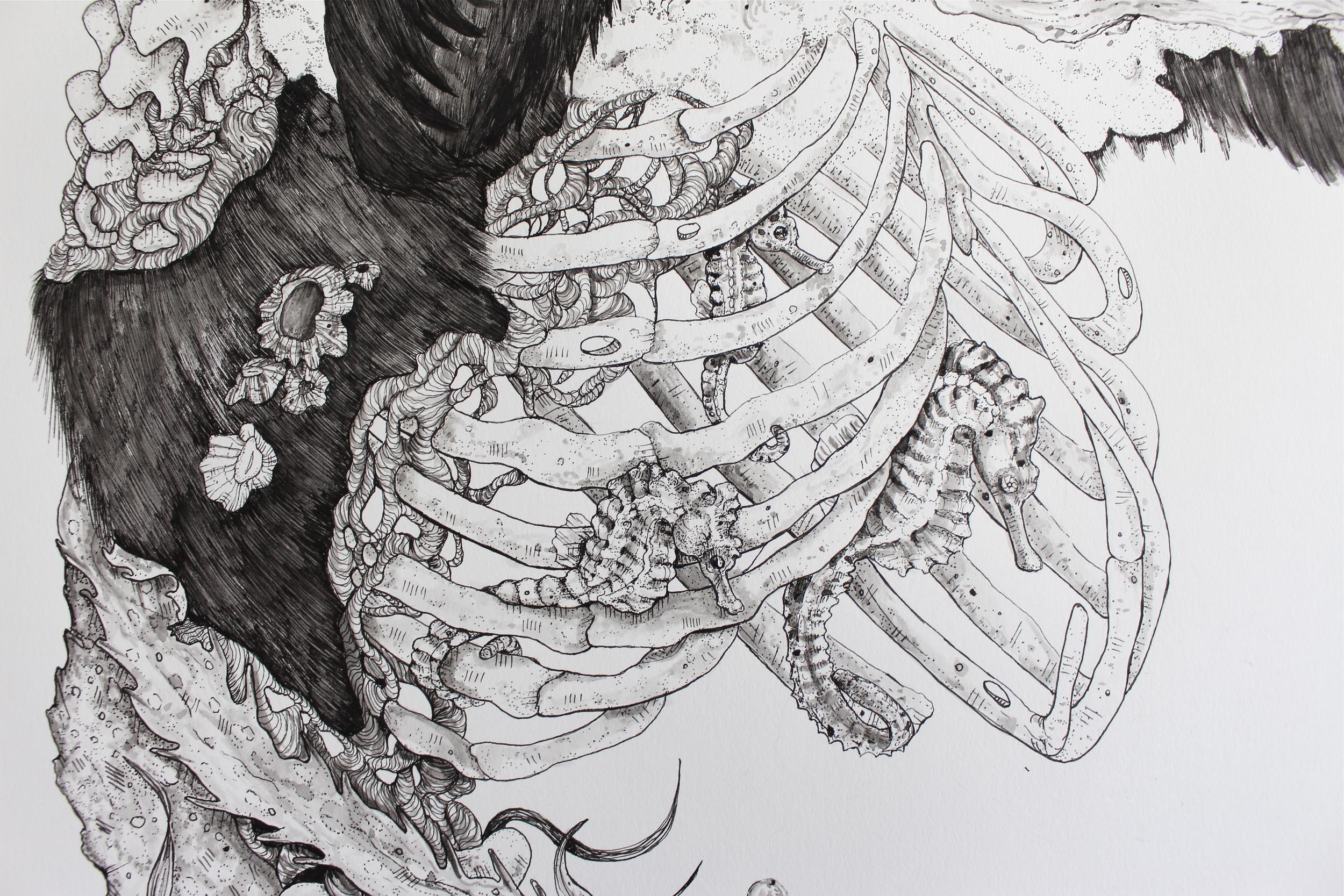 Ursus americanus (Detail Shot)