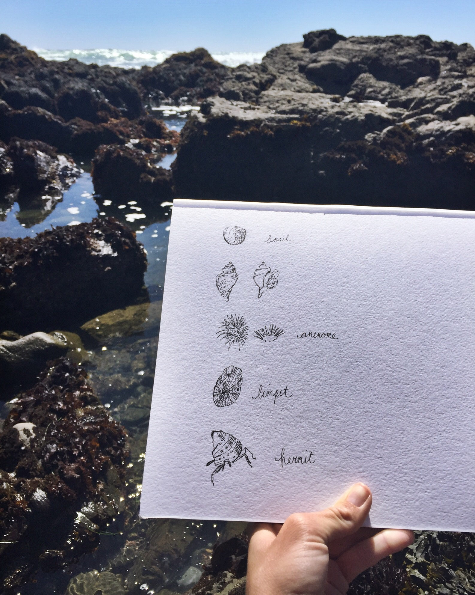 Doodles in tide pools