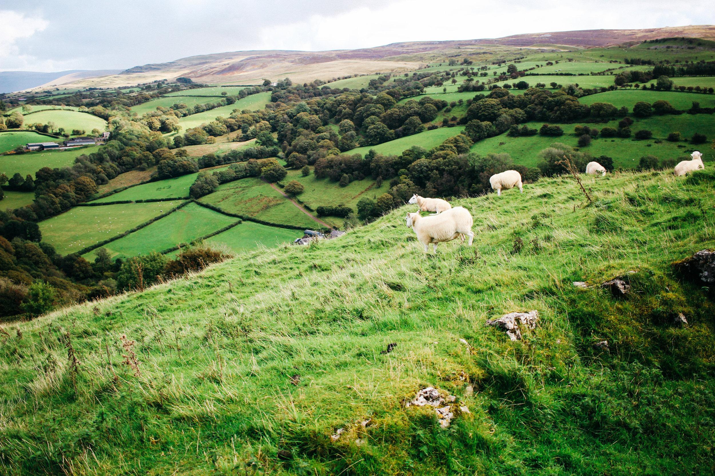 Wales-2776.jpg