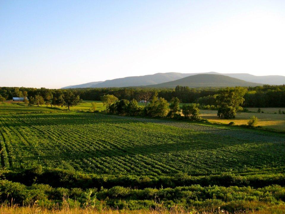 Stoneledge Farm S. Cairo, NY