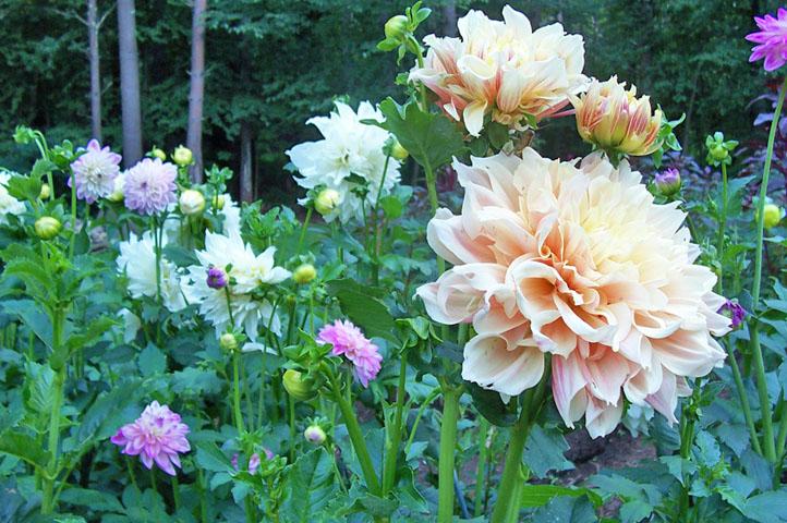 gardening6.jpg