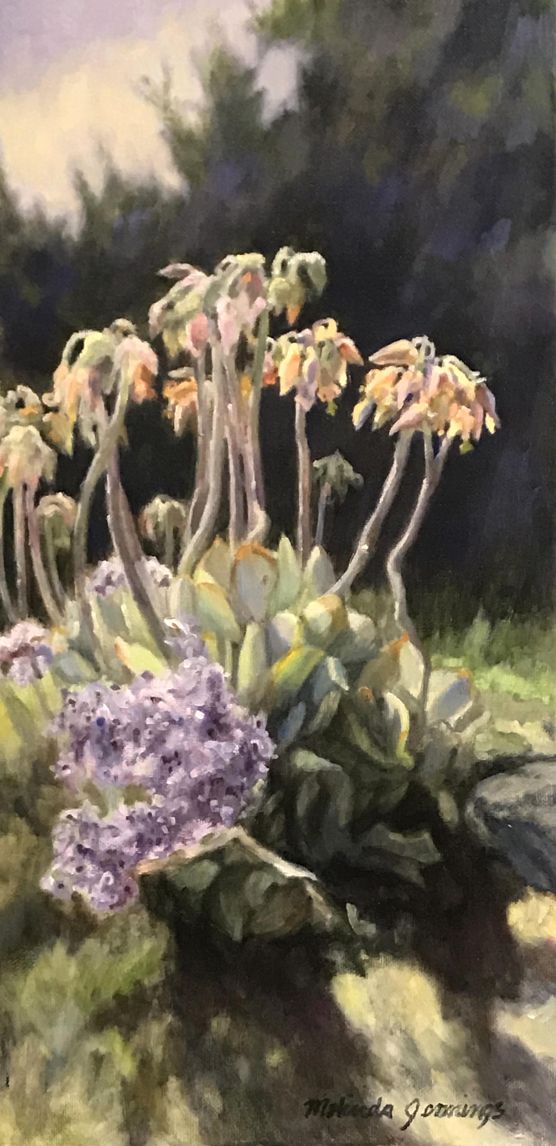Solana Beach Flowers