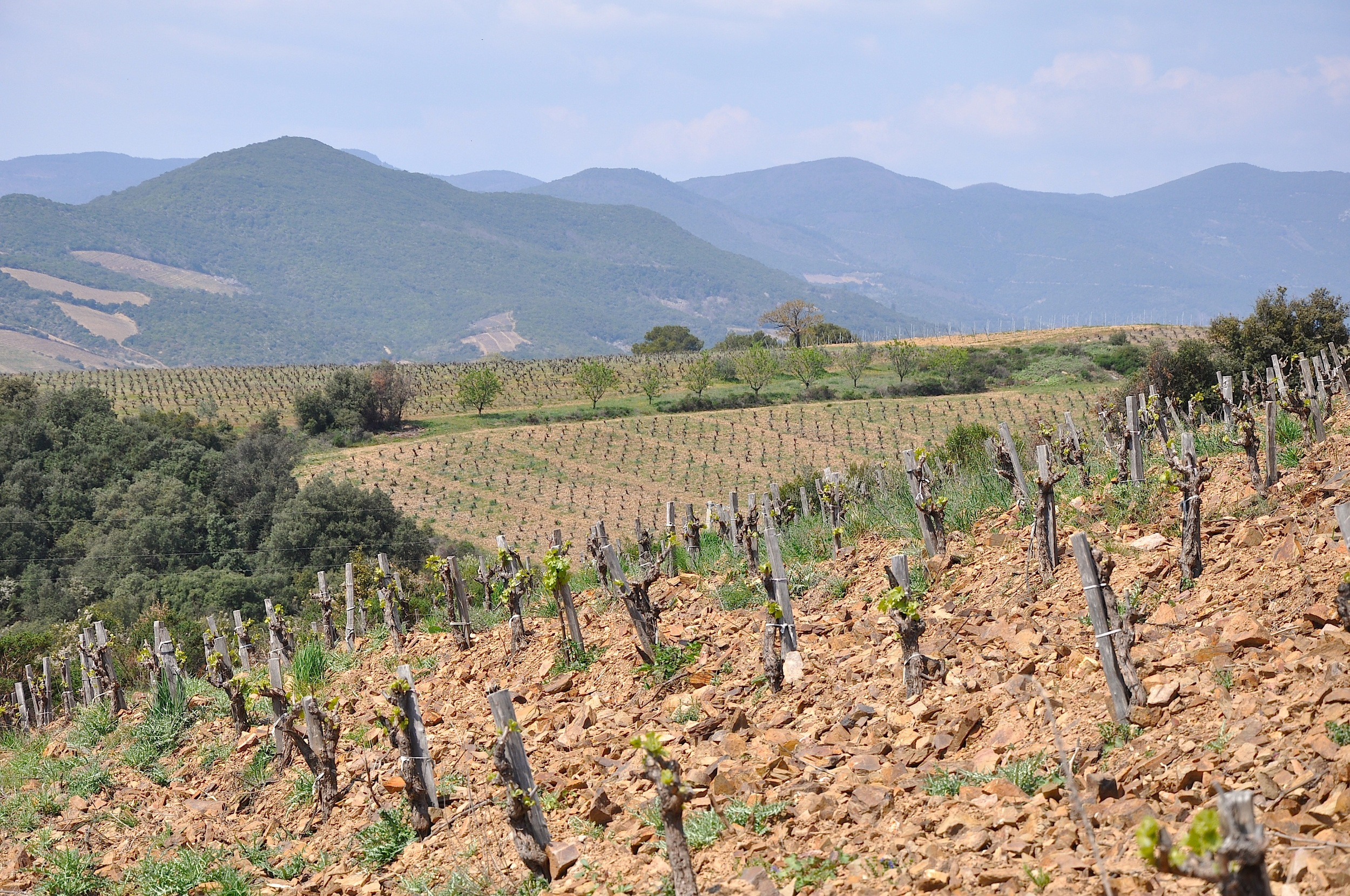 Domaine Navarre - Saint-  Chinia  n