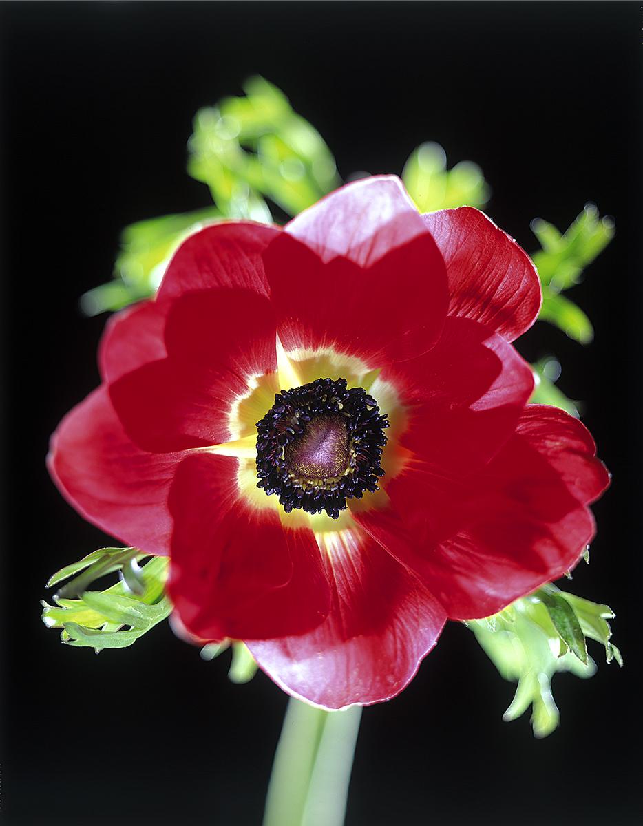 red flower sharp.jpg
