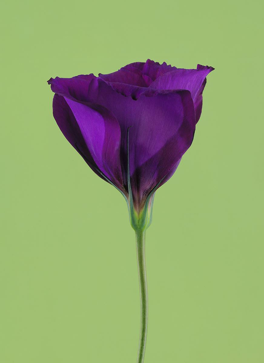 purple flower clean.jpg
