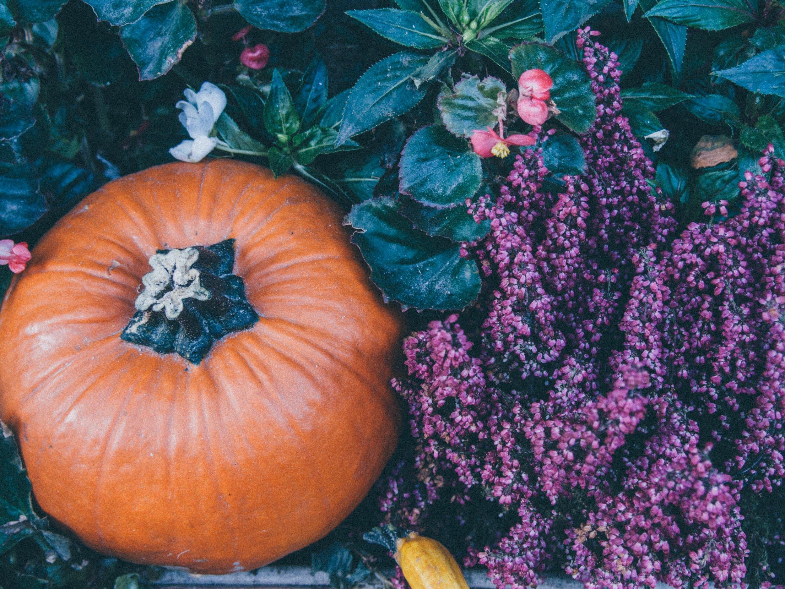 growth-halloween-leaves-9779.jpg