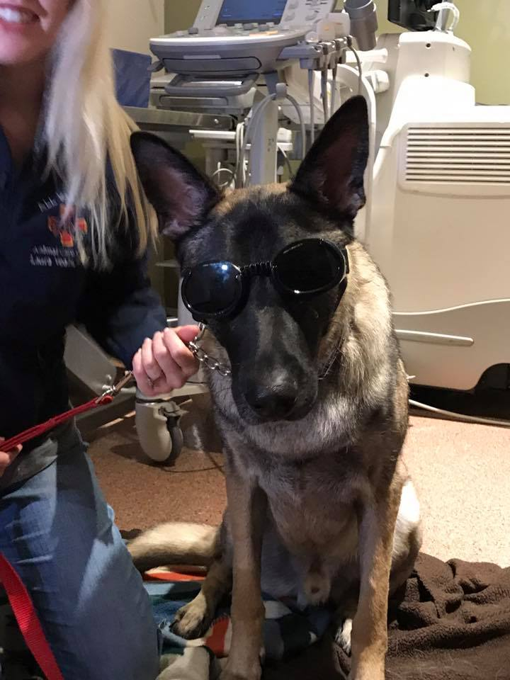 Bear Doggles.jpg
