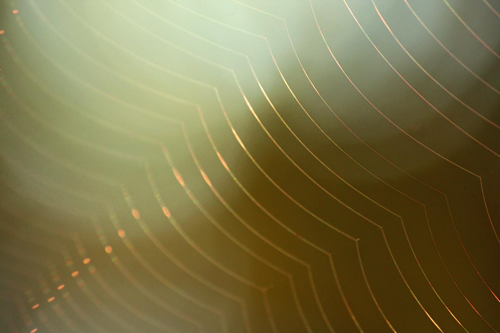 spiderwebsunrise