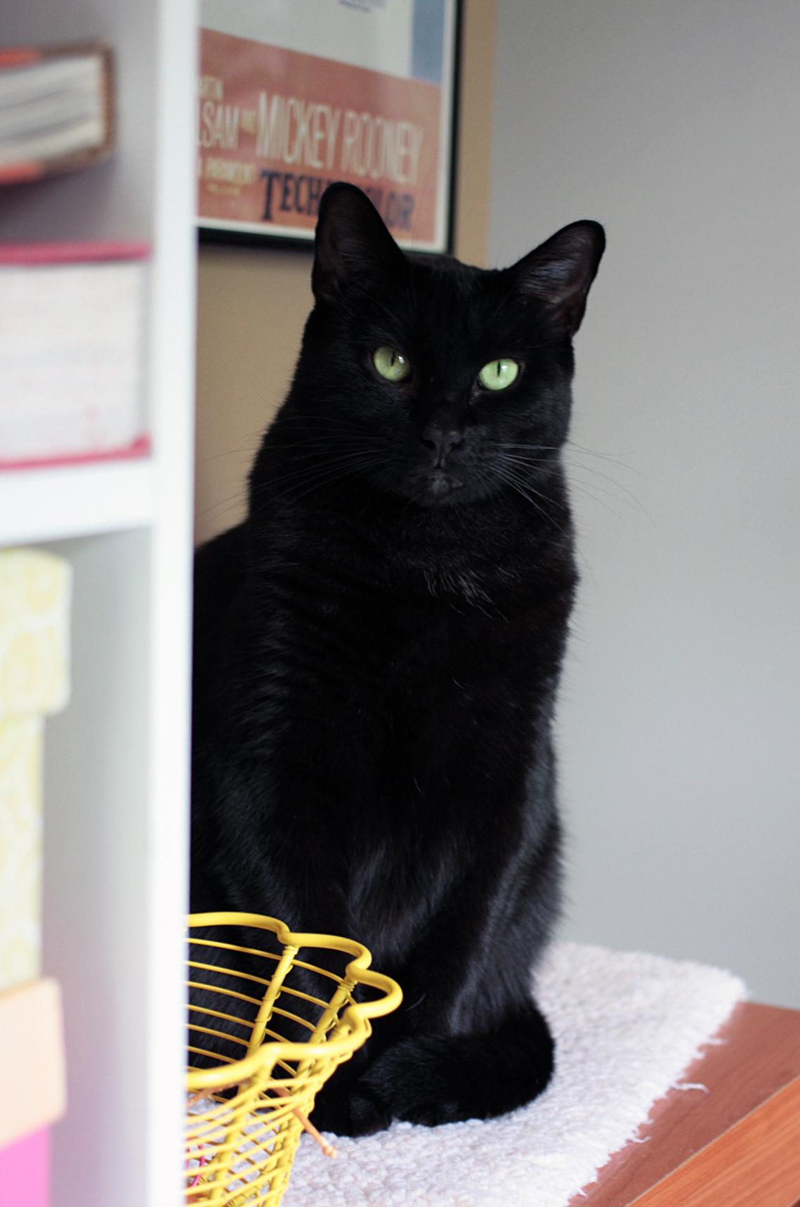 Pekoe Panther Peeking Pretty Peculiarly