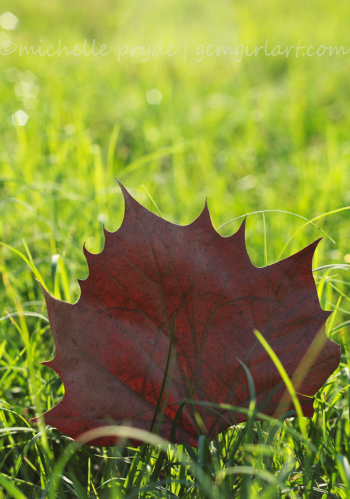 The Loneliest Leaf of Winter - 006/365