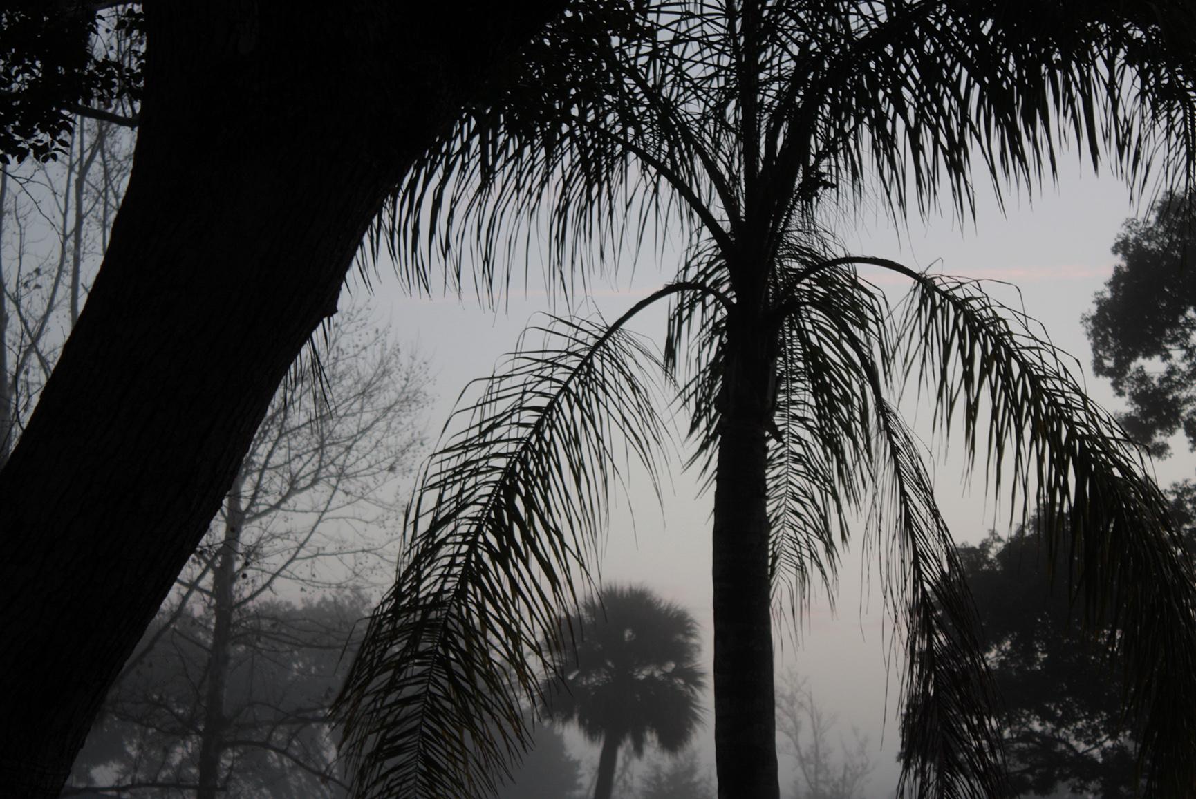 Foggy Yard - 012/365