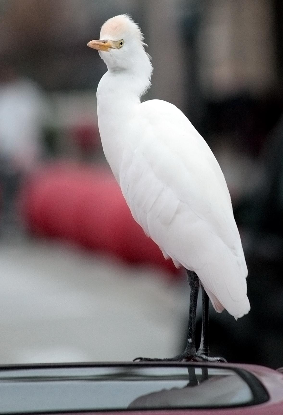 Hey, Bird. 015/365