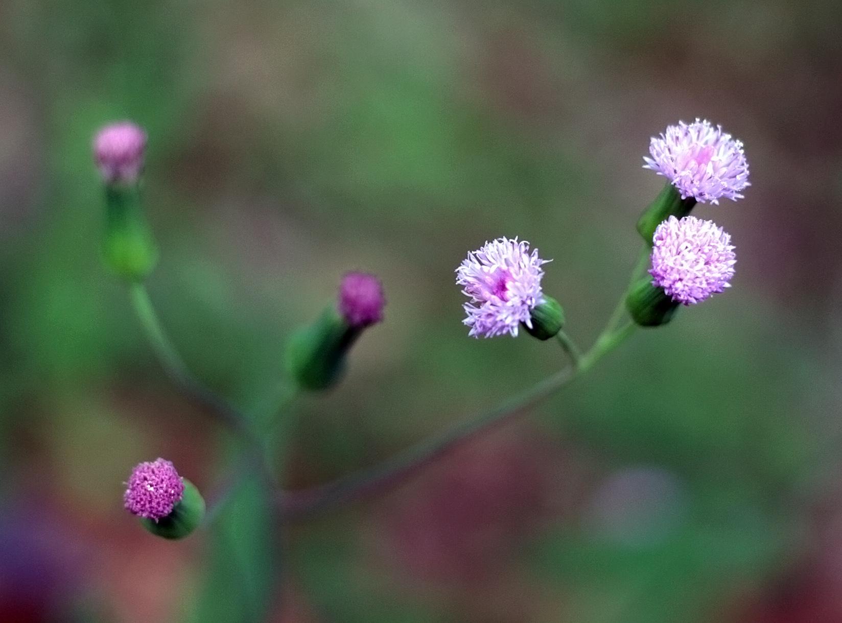 Beautiful Weeds - 017/365