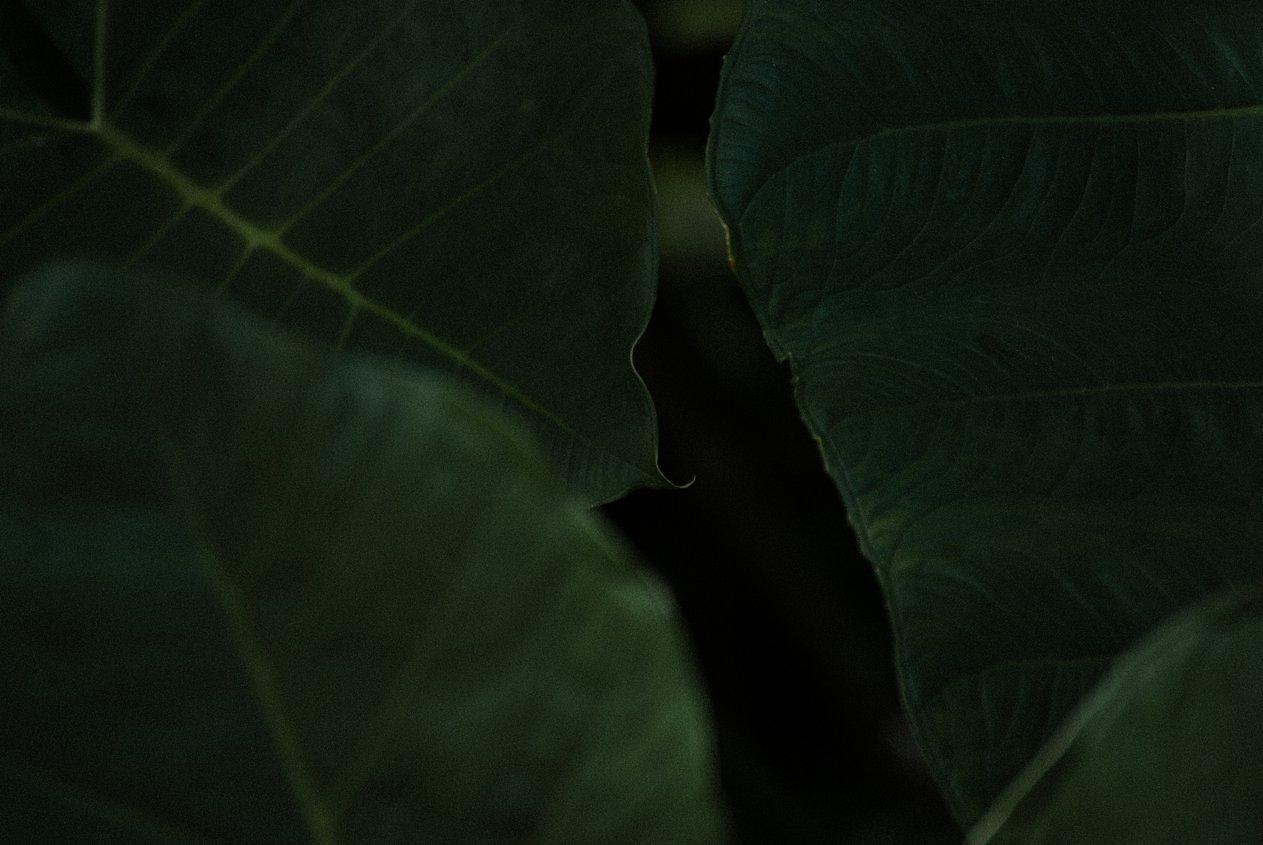DSC_0015_WEB.jpg