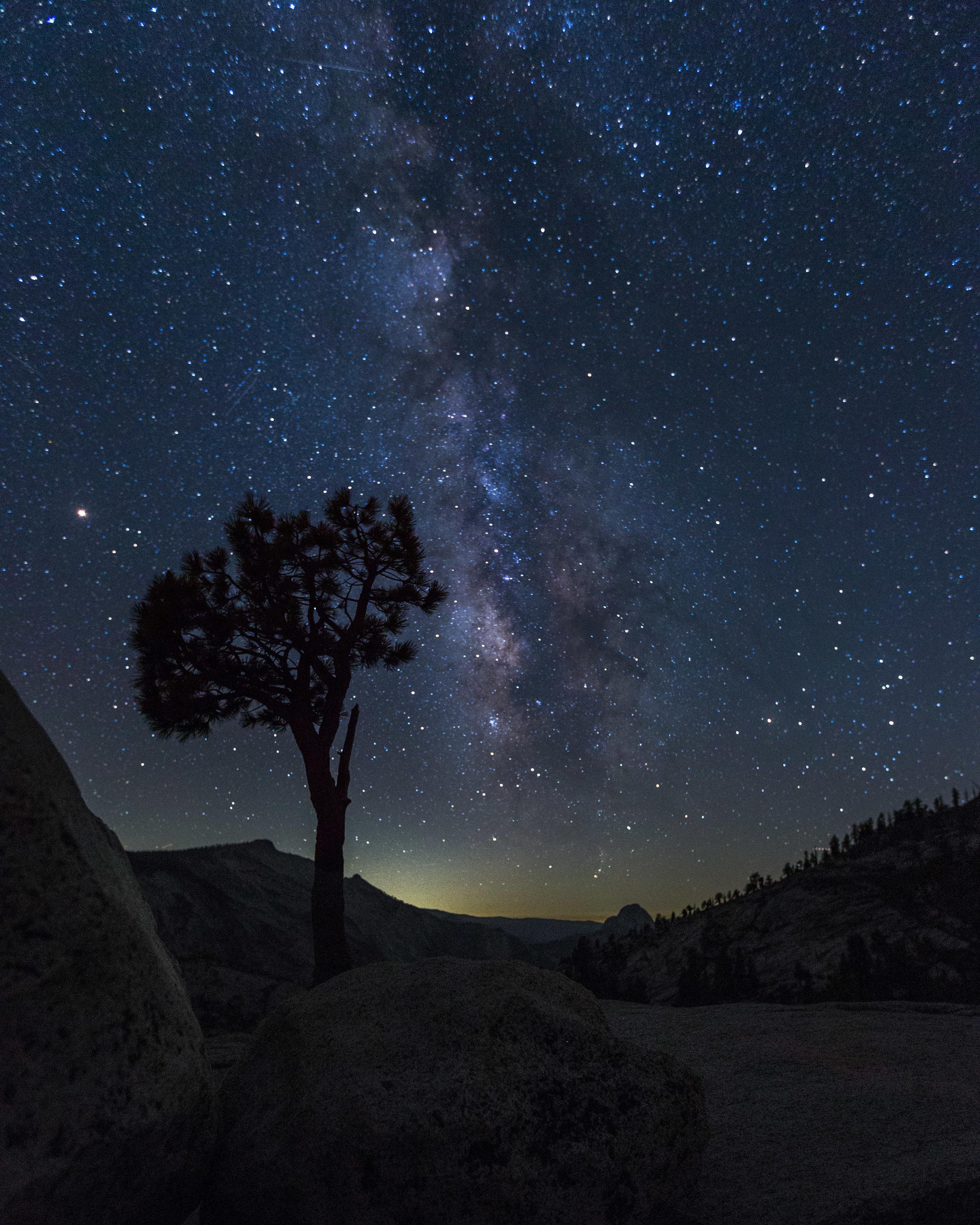 Yosemite Lollypop Tree