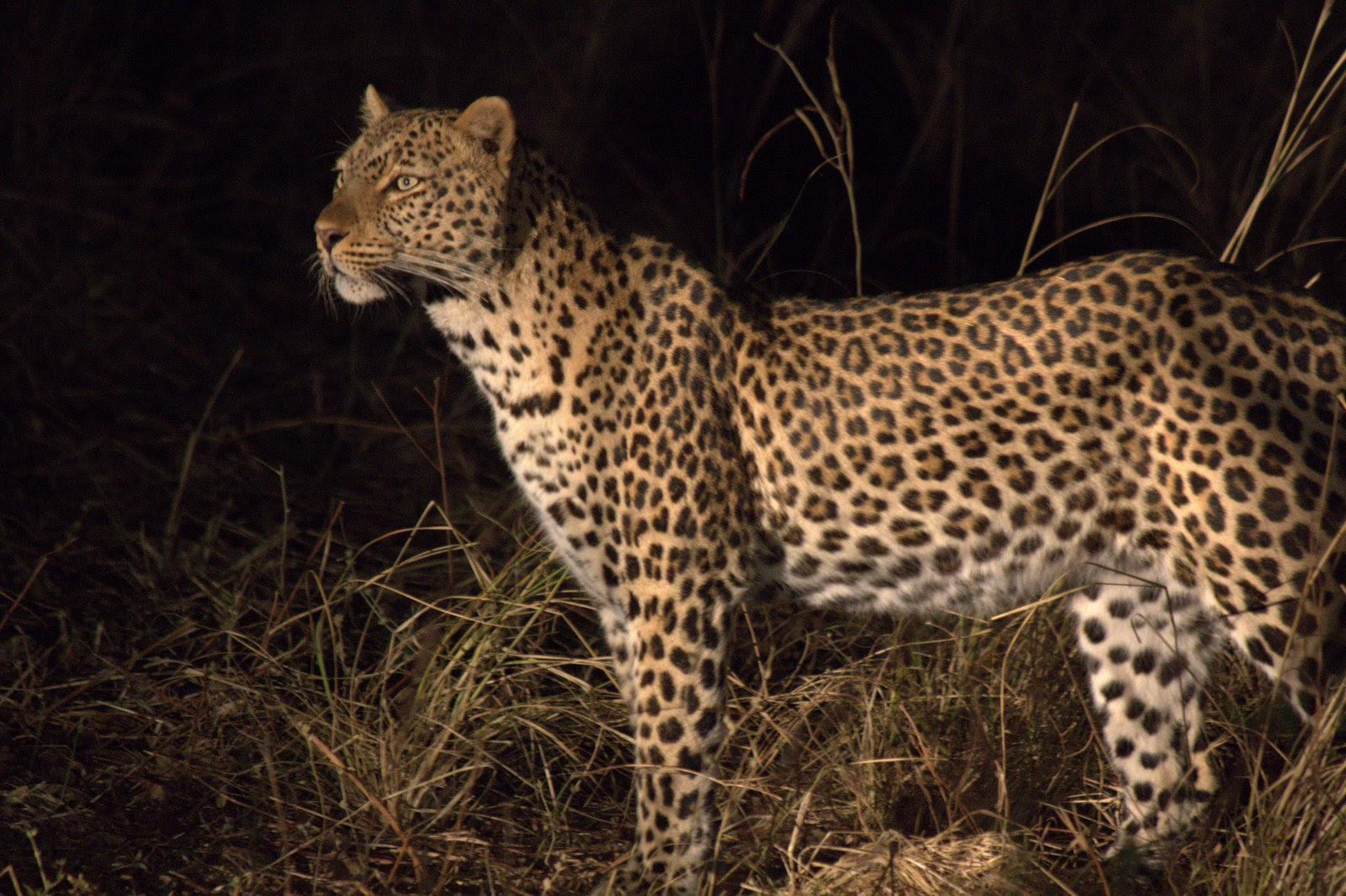 Huntress, Zambia