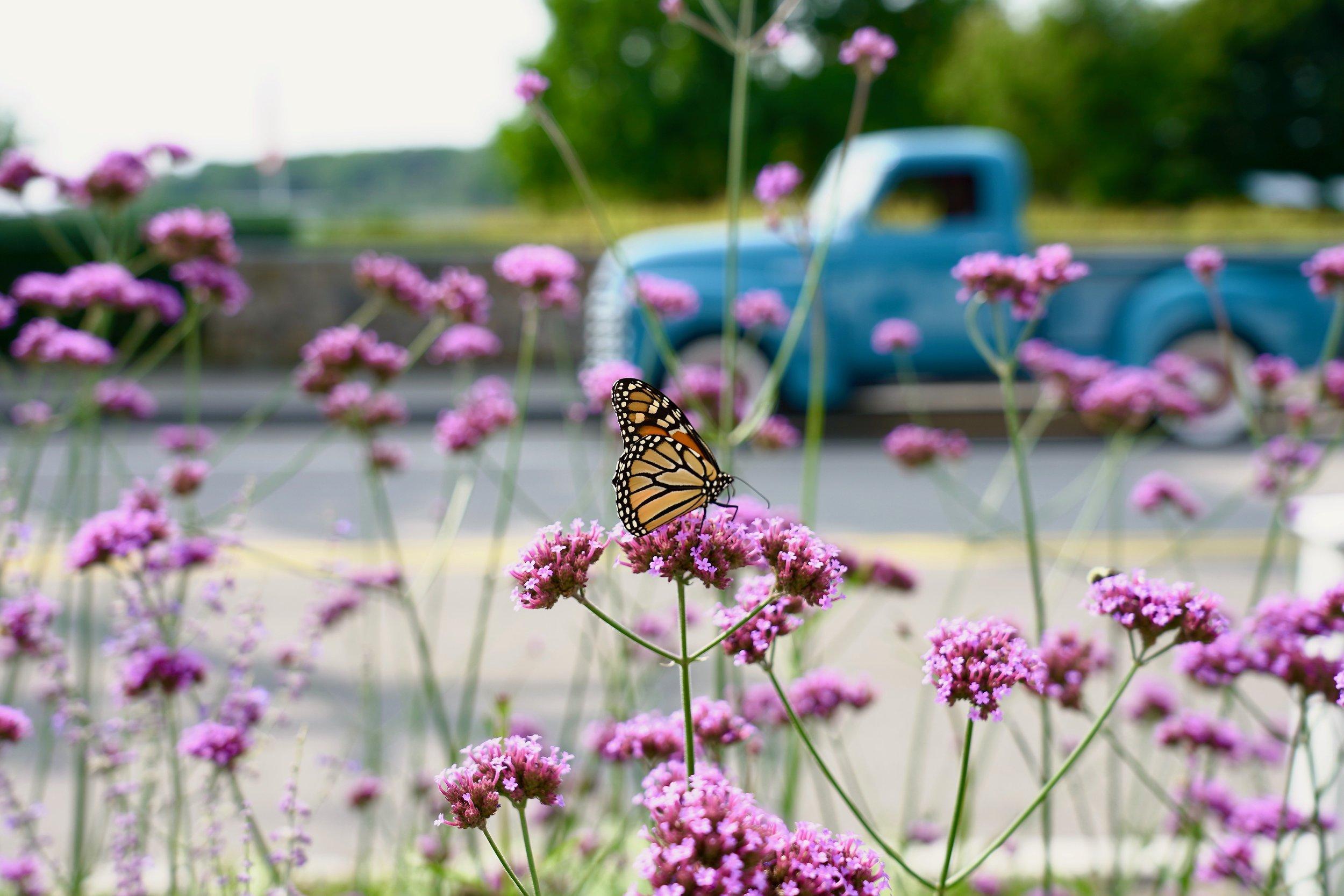 Harbor Inn Butterfly