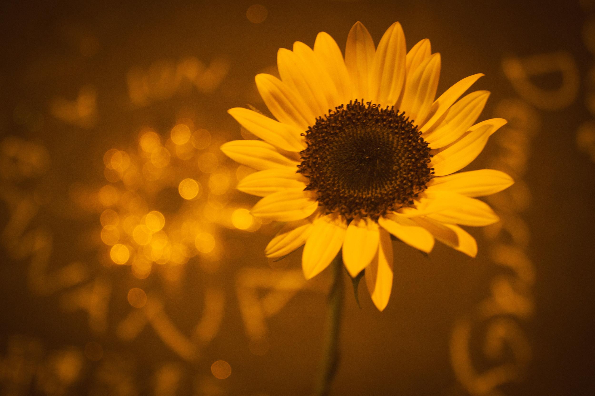 2014年4月5日凌晨4點鐘, 不論白天或夜晚,持續勇敢綻放的太陽花!
