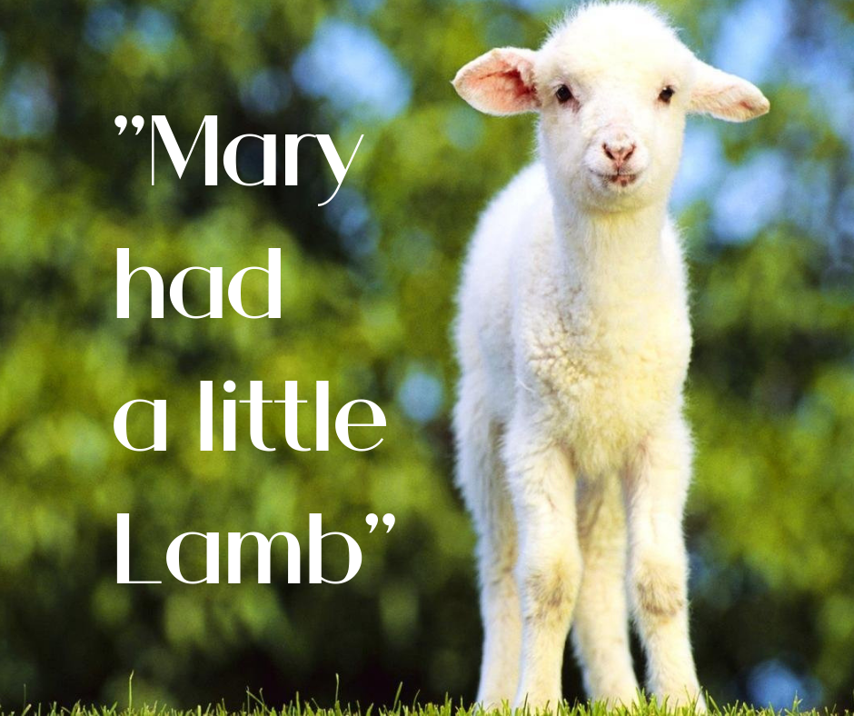 Mary had a little Lamb - FB.png