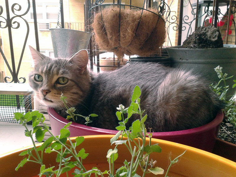 Gus in Catnip Planter