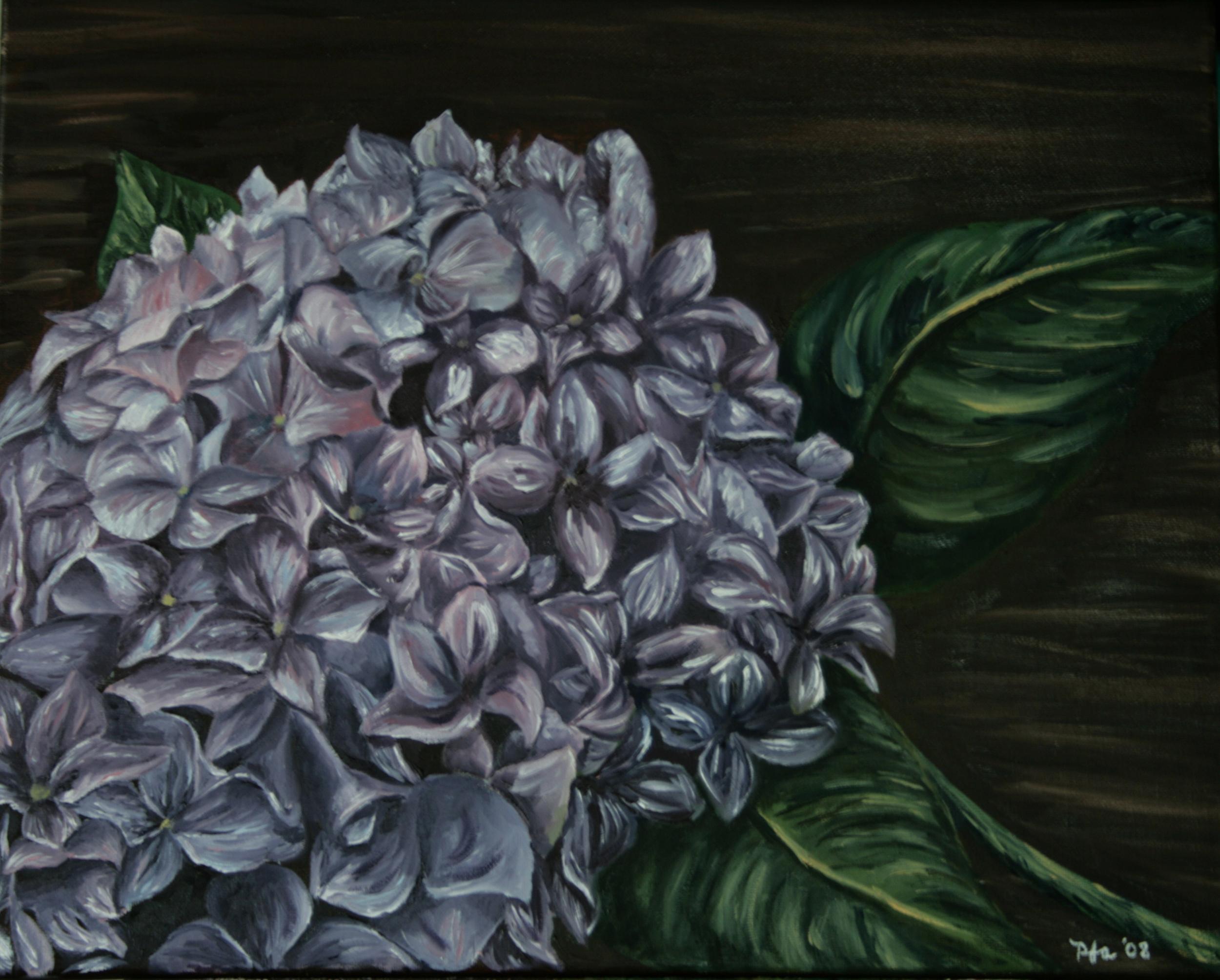 Chris' Hydrangea, Oil on canvas, 16''x20'', 2008