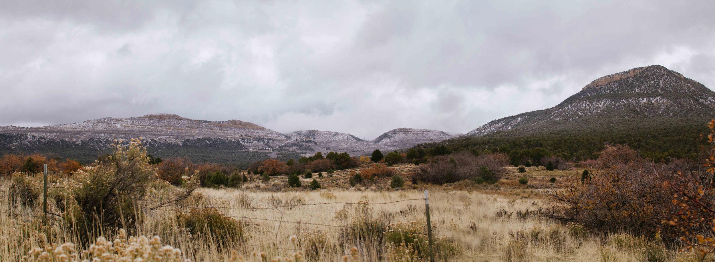 zion landscape ponderosa.jpg