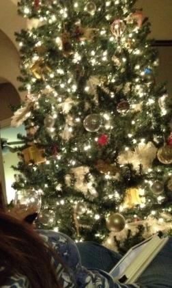If Christmas trees took selfies