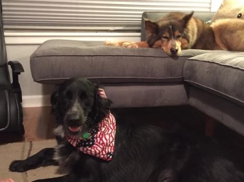 Thanksgiving_Pups.jpg