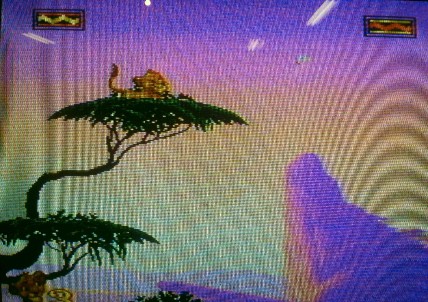 simba_in_tree