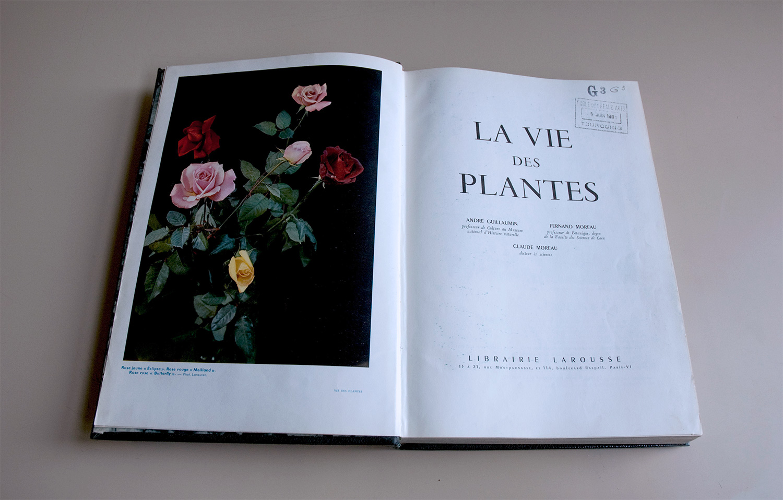 la vie des plantes  Lightjet print 27 x 40 inches 2011