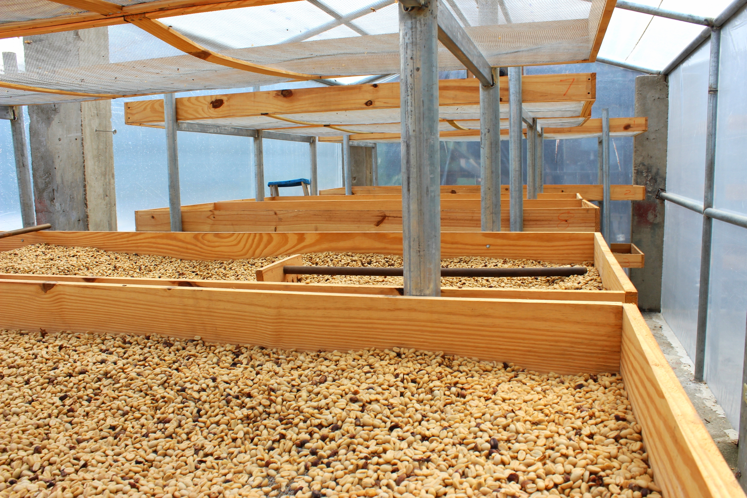 Raised drying beds for the Gourmet coffee.