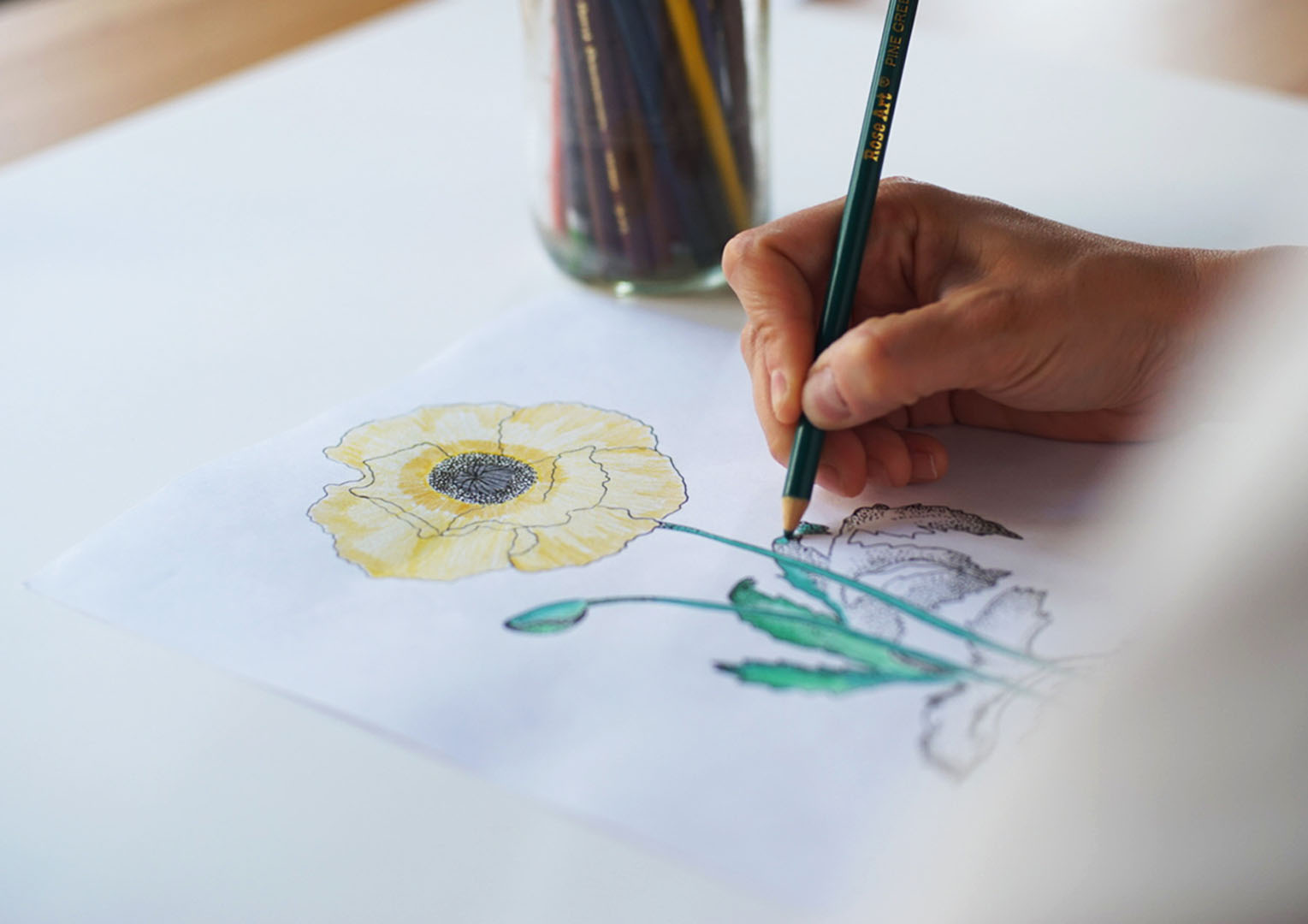 Poppy Coloring Book.jpg