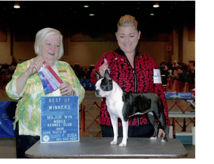 Champions (Female) — KC's Boston Terriers