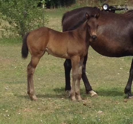 PAINTED OUT WEST 2016 filly by WAGONS WEST