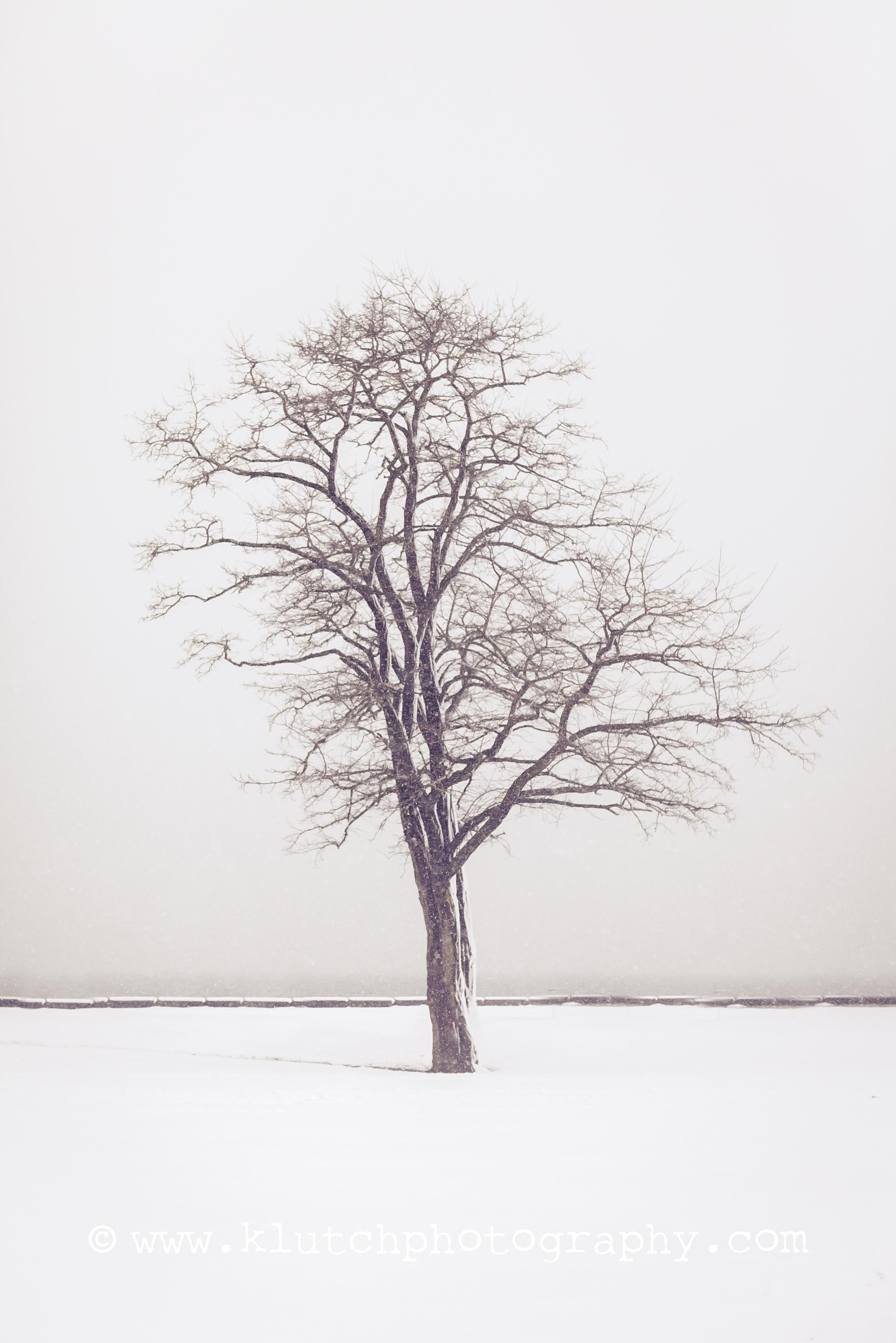 2014 snow shoot nature-2074