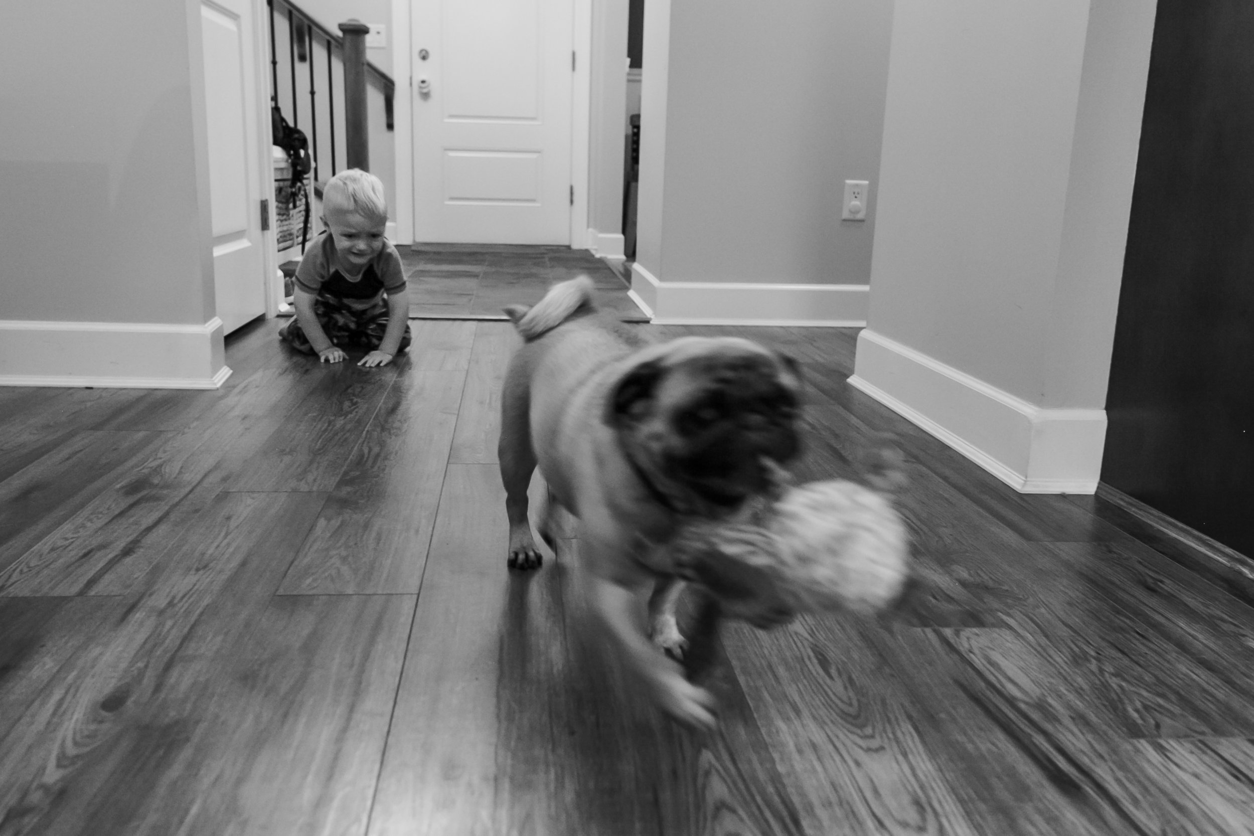 Surrey Family photographer. Vancouver family photographer, klutch Photography, documentary photography, candid photography, dog steals child's toy