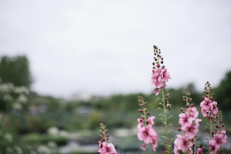 The_Secret_Herb_Garden_Edinburgh_Nikki_Leadbetter_Photography_Alternative_Wedding_Photography-9.jpg