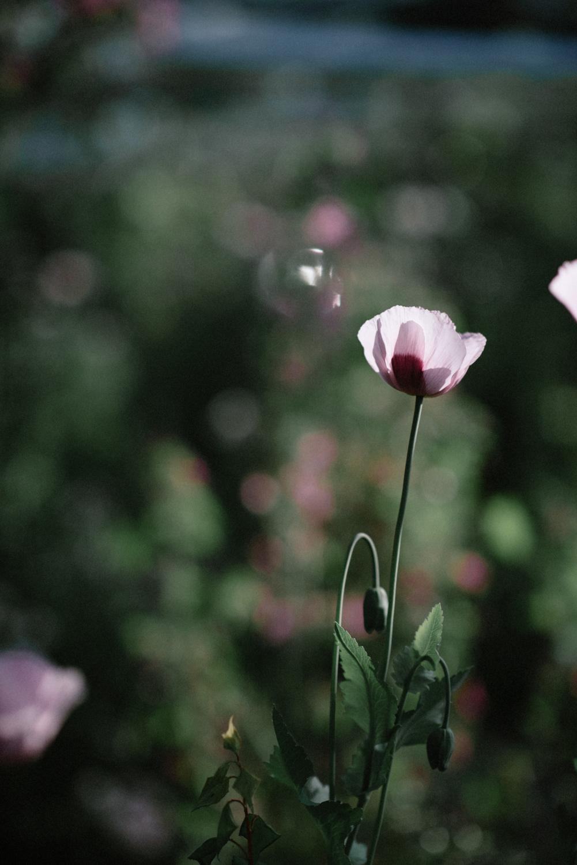 The_Secret_Herb_Garden_Edinburgh_Nikki_Leadbetter_Photography_Alternative_Wedding_Photography-708.jpg