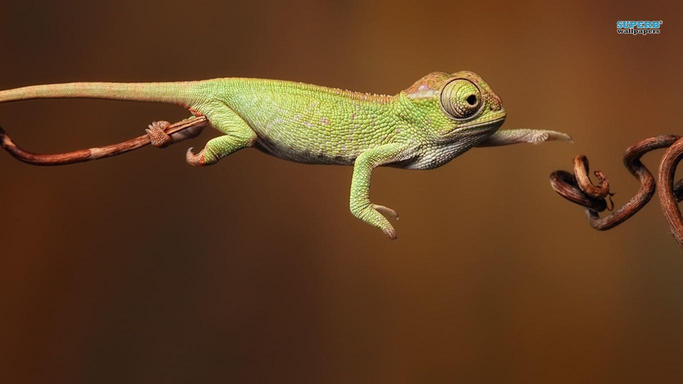 OMG! A Chameleon!