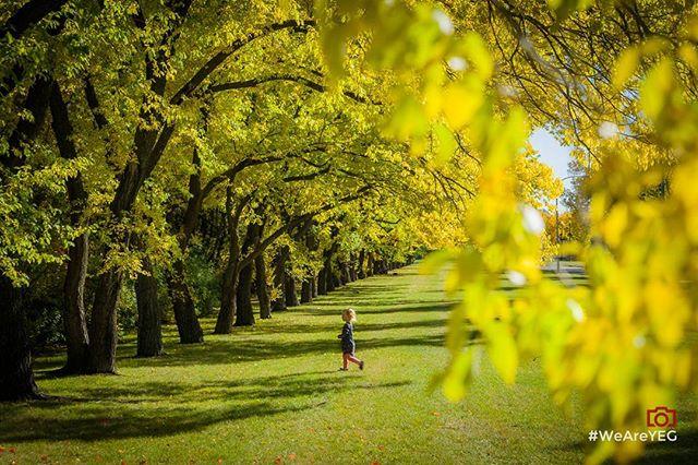 """Autumn Discovery"" •  #WeAreYEG, the Edmonton Original Social Image Creators. ⬇ 📷 photo • @dpfotographic 📬 curators • @dpfotographic • @squattingmonkeys • @tmt1080 ⬇ 🏃 Remember to check out the creator's feed ⬇ #yegphotographic #yeglife #edmonton #edmontonlife #780 #yeg #thecreatorclass #igyeg #artofvisuals #canadaday #bevisuallyinspired #justgoshoot #yeggers #photooftheday #streetdreamsmag #illgrammers #meistershots #visualsgang #peoplescreative #exklusive_shot #igmasters #dopeshots #visualsoflife #visualscollective #yegfall"
